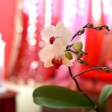 Tantric massage Soho